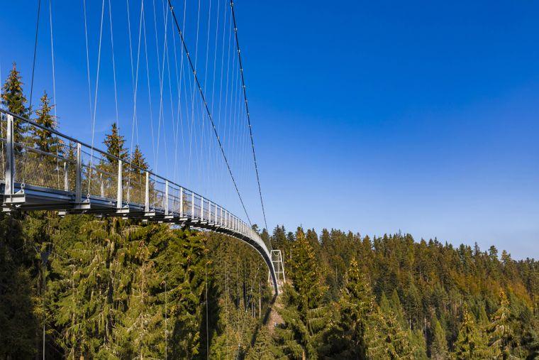 Über dem wunderschönen Schwarzwald thront die Wildline-Hängebrücke.