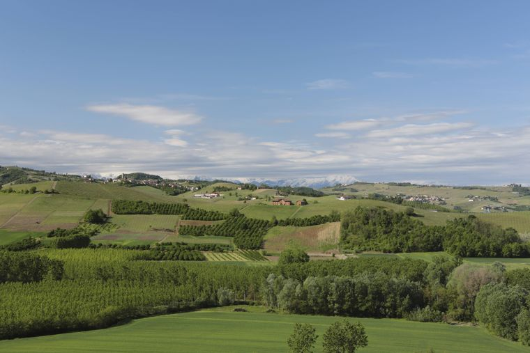 Landschaft Langhe, hinten die schneebedeckten Alpen, Piemont, Italien.