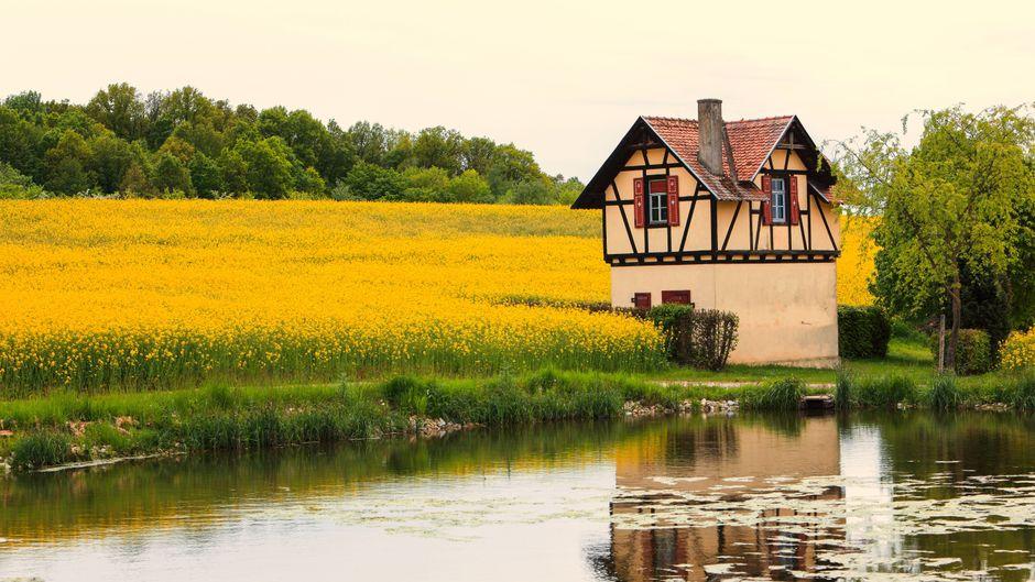 Ein kleines Fachwerkhaus, umgeben von blühenden Rapsfeldern, bei Bamberg.
