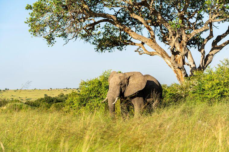 Im Serengeti Nationalpark in Tansania gibt es unter anderem Elefanten zu beobachten.