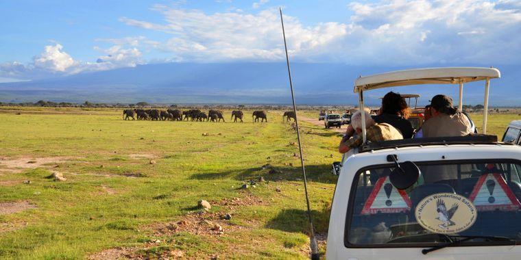 Ein atemberaubender Anblick: Eine Elefantenherde im Amboseli-Nationalpark in Kenia.