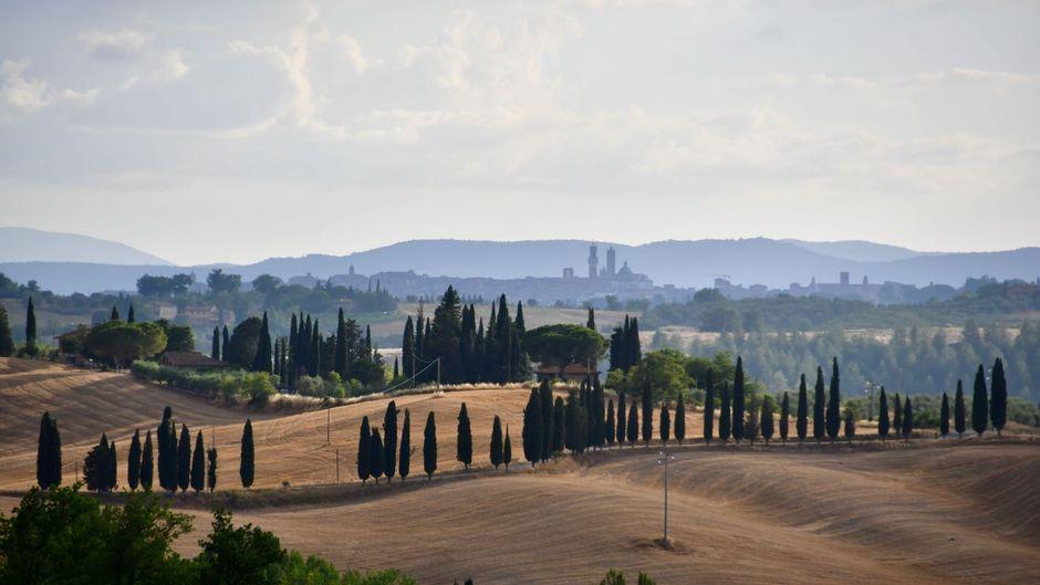 Das typische Toskana-Bild. Zypressen prägen die hügelige Landschaft, im Hintergrund sind die Türme von Siena noch erkennbar.