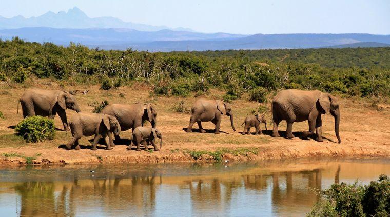Elefanten an einem Wasserloch in Südafrika