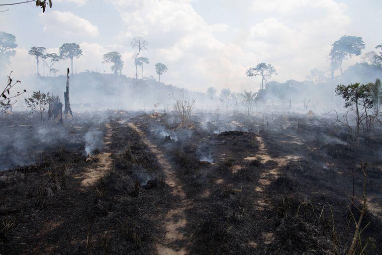 Trostlos und erschreckend: Verbrannte Erde in Brasilien.