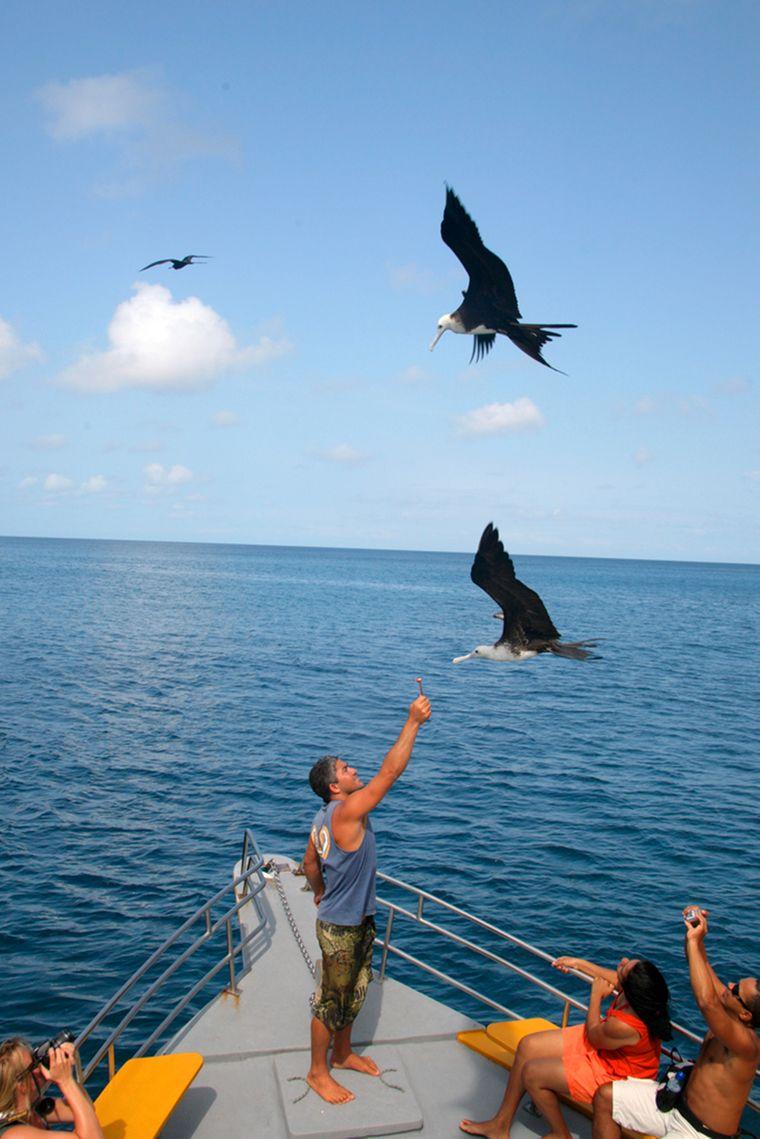 Ein Mann füttert einen Vogel von Bord eines Bootes aus vor Fernando de Noronha.