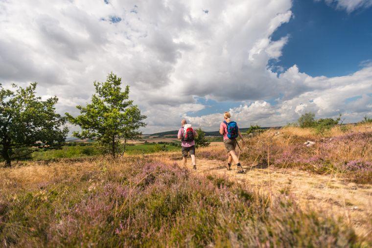 Von August bis Oktober blühen die Heideflächen rund um Siefersheim. Dann lohnt sich die Hiwweltour Heideblick besonders.