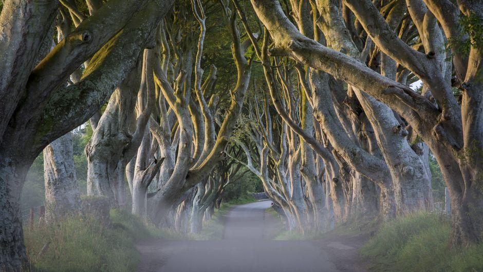 Die Bregagh Road in Nordirland.