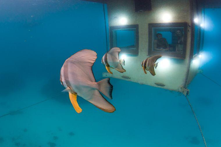 Der Unterwasser-Bungalow des Manta-Resorts in Tansania