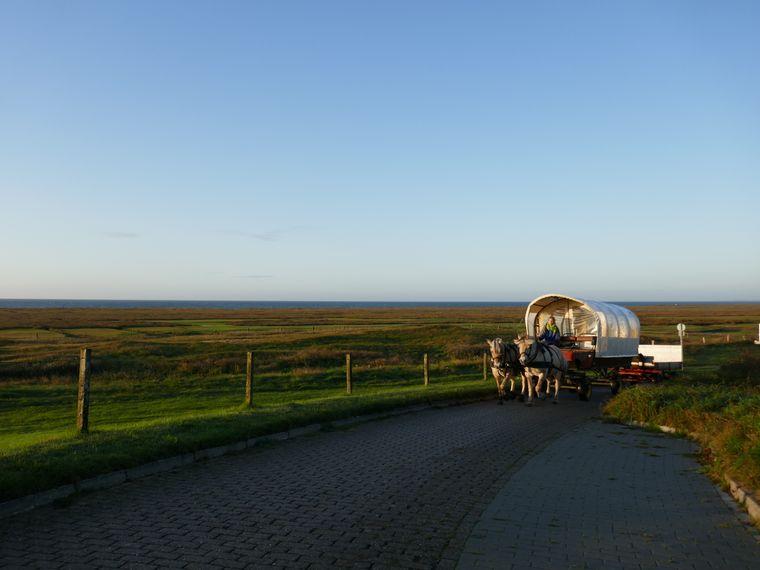 Mit zwei PS über die Insel: Bei einer Fahrt mit der Pferdekutsche reist du für ein paar Momente in die Vergangenheit.