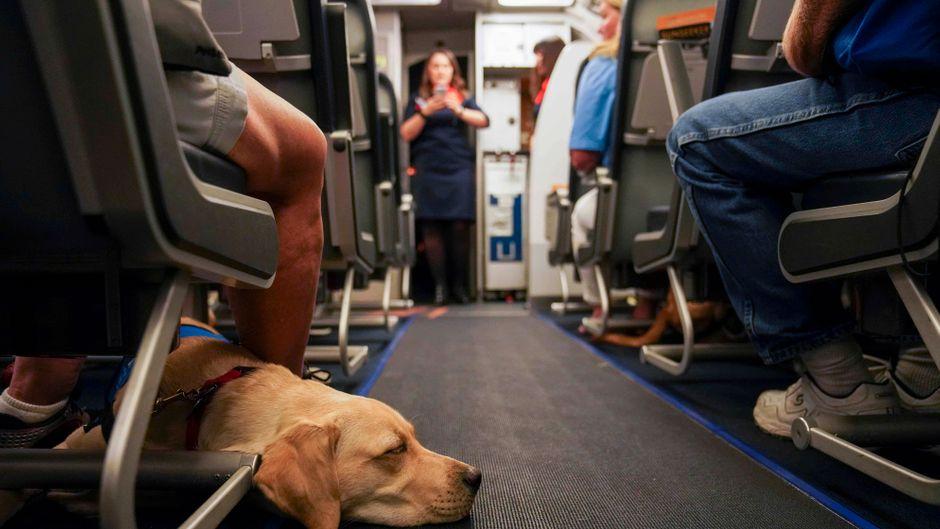 Ein Hund liegt auf dem Boden einer Flugzeugkabine.