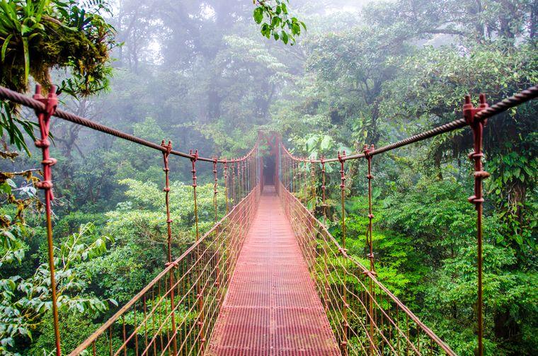 Hängebrücke im Nebelwald Monteverde.