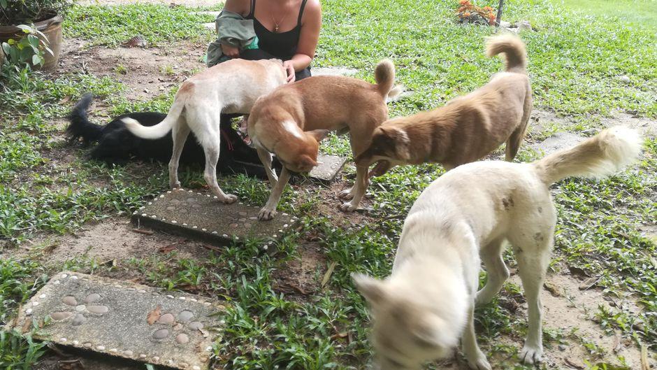 Jacqueline Bohrmann inmitten von Hunden beim Housesitting.