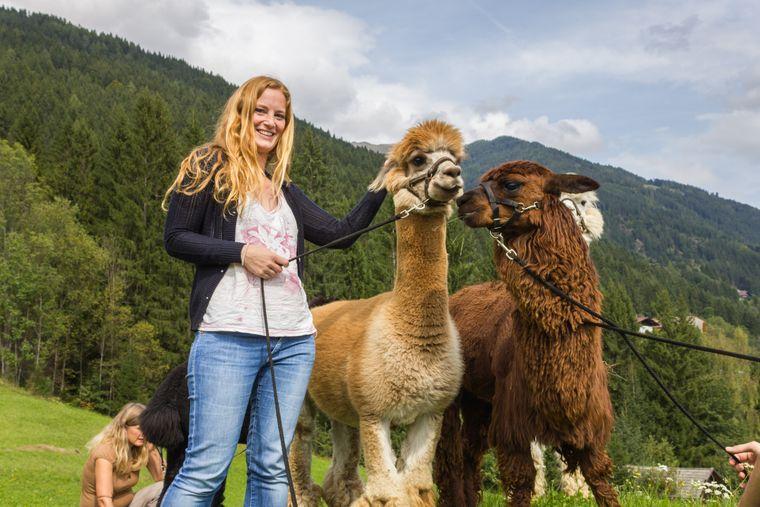 Alpakas: Die flauschigen Freunde frönen ihres Daseins sonst in den Anden von Peru.