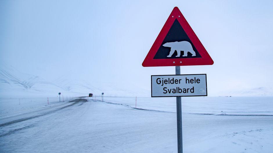 Vorsicht, Eisbären. Auf Spitzbergen soll es mehr Eisbären als Menschen geben.