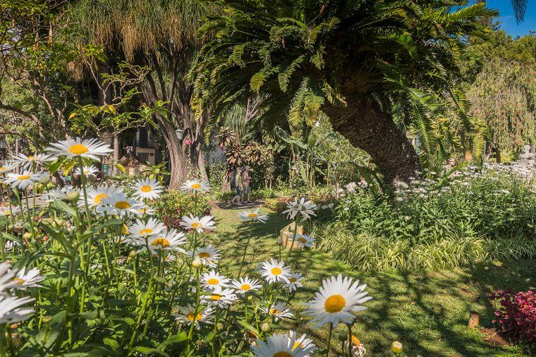 Im Jardim Municipal do Funchal, dem Stadtpark, wachsen einheimische Pflanzen, aber auch viele Exoten.