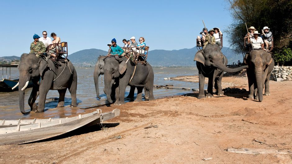 Elefantentouren sind ein Highlight für viele Touristen – doch die Tiere leiden darunter. Ein Park in Vietnam hat sie jetzt verboten.