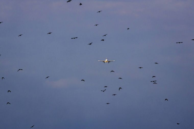 Flugezug und Vögel.