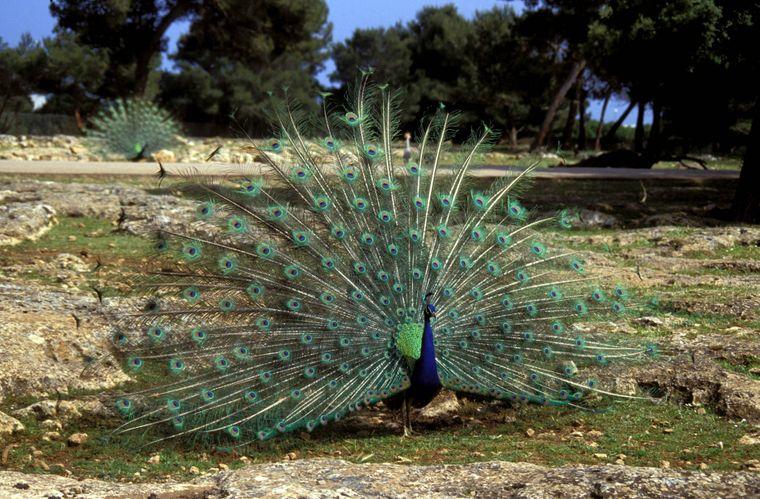 Ein kleines bisschen afrikanische Wildnis auf Mallorca: Das bietet der Safari-Zoo bei Cala Millor.