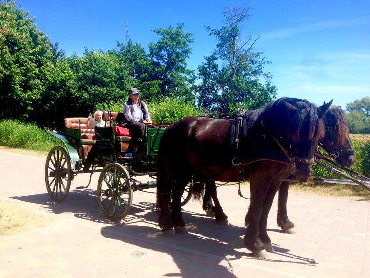 Ein echter Tipp: Kutsche fahren mit Luise und Cathleen