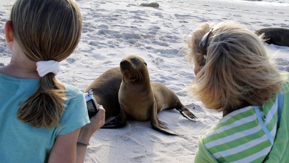 Eine Frau und ihre Tochter beobachten einen kleinen Seelöwen.