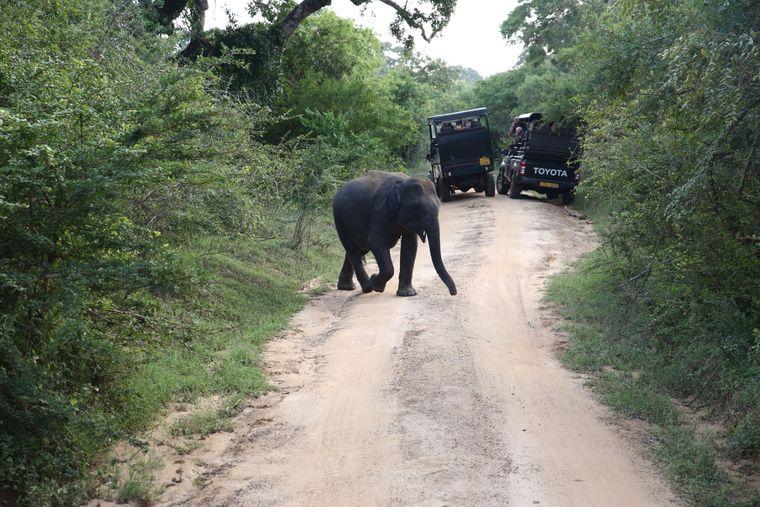 Aber nicht nur aus der Ferne: Wenig später kreuzte eine Elefantenmama mit ihren beiden Babys den Weg. Hier: eines der Elefantenbabys.