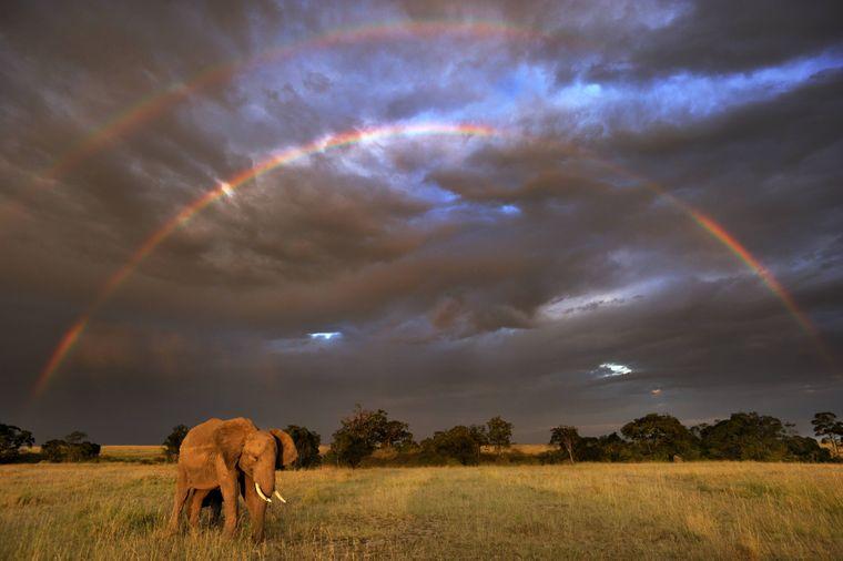 Im Nationalpark Masai Mara in Kenia kannst du mit etwas Glück nicht nur wilde Tiere sehenn sondern auch einen Regenbogen.