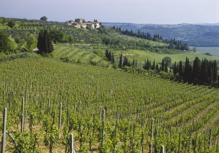 Weinberge in Chianti, einem der bekanntesten Weinanbaugebiete der Toskana.