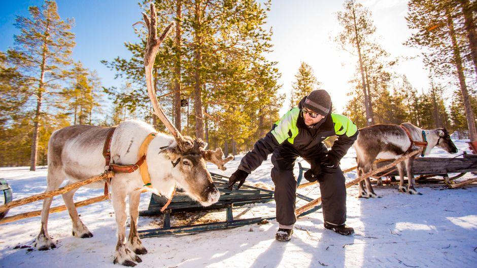 Rentiersafari im Kakslauttanen-Igludorf, Saariselka, Finnland.