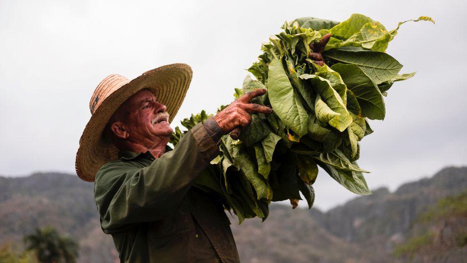Tabakbauer im Valle de Viñales