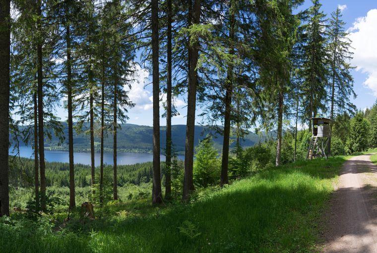 Vom Jägersteig im Schwarzwald hast du einen guten Blick auf den Schluchsee.