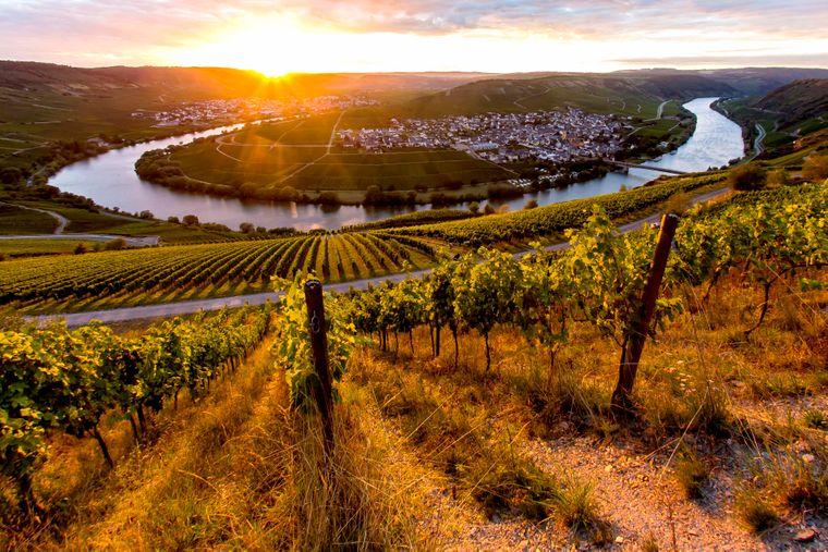 Trittenheim ist eine Ortsgemeinde an der Mittelmosel im Landkreis Trier-Saarburg in Rheinland-Pfalz. Sie gehört der Verbandsgemeinde Schweich an der Römischen Weinstraße an.