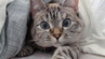 """Auch Nala Cat ist beim """"Meowfest"""" in Vancouver dabei."""