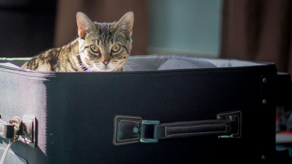 Ein Paar aus Florida hatte die Katze in den Koffer gesteckt und am Flughafen aufgegeben.
