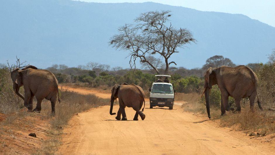 Elefanten überqueren eine Straße in Kenia.