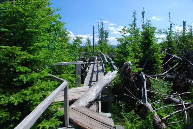 Der Lotharpfad im Schwarzwald zeigt, wie sich die Natur nach Sturmschäden erholt.
