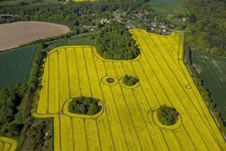 Vom Blumenthaler Aussichtsturm kannst du auf die Prignitzer Landschaft schauen. (Symbolbild)