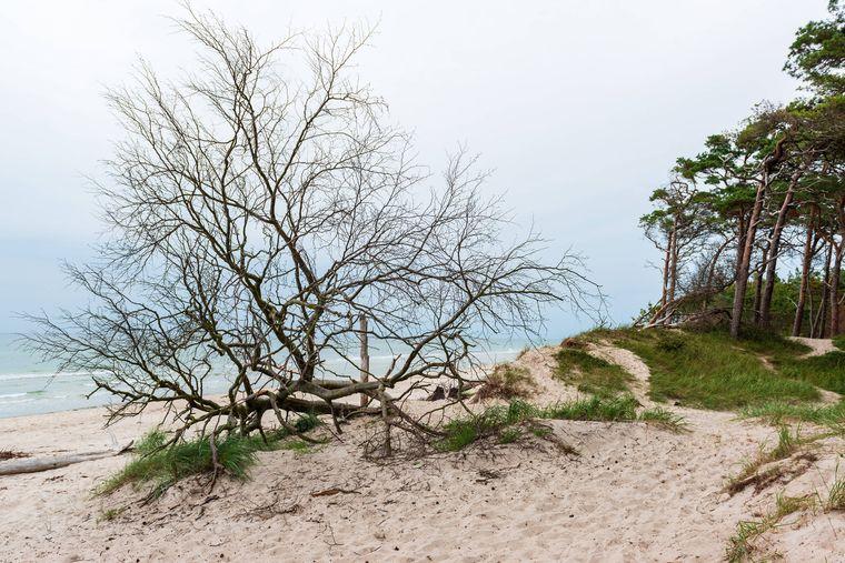 Der Weststrand mit seinem Kiefernwald bis an das Ufer wird durch Herbst- und Winterstürme angegriffen.