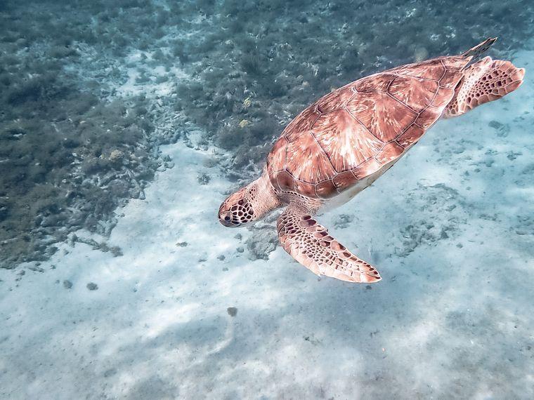 Dieser Schnappschuss ist beim Schnorcheln mit den frei lebenden Schildkröten auf Curaçao entstanden.