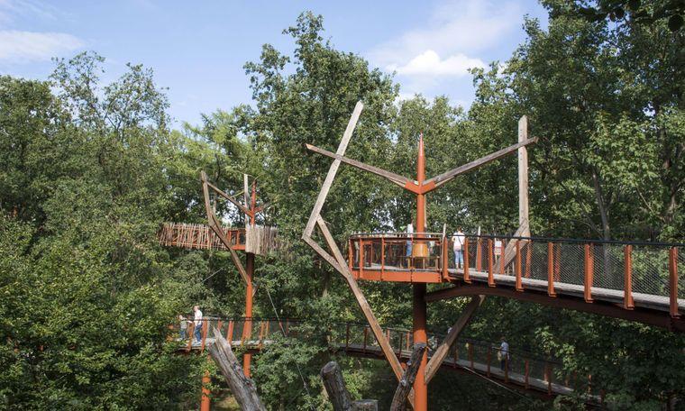 Besucher auf dem in 20 Metern Höhe verlaufenden Baumkronenpfad über den tausendjährigen Eichen von Ivenack in Mecklenburg-Vorpommern.