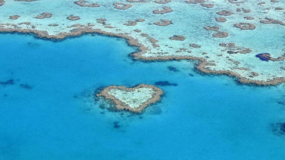Das berühmte Heart Reef in Australien kann jetzt wieder von Tagestouristen mit dem Boot besucht werden.