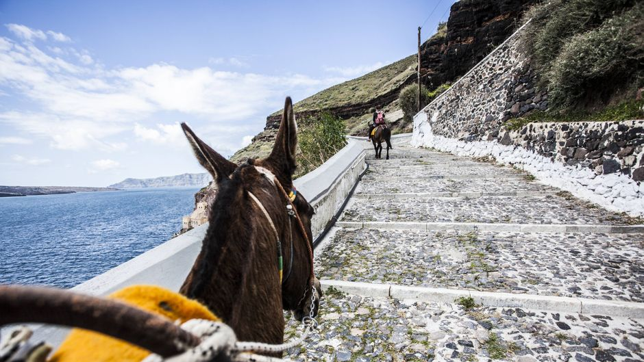 Esel auf Santorin.