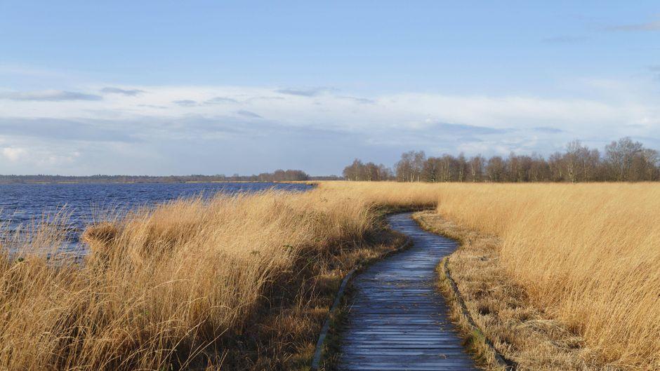 Ewiger Spaziergang ganz rund um den Hochmoorsee – oder lieber die kurze Route entlang des Bohlenwegs am Ewigen Meer in Ostfriesland? Du hast die Wahl.