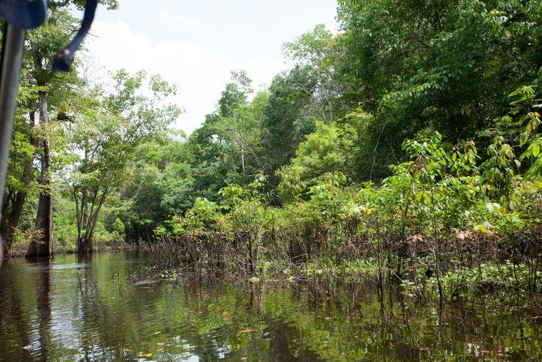 Der Amazonas-Regenwald in Brasilien ist der größte tropische Regenwald der Welt.