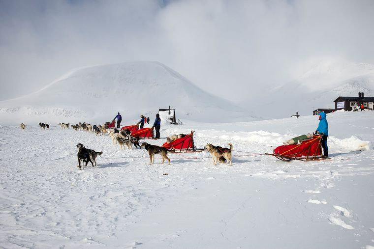 Die verschneite Landschaft zu durchqueren ist für die Huskys kein Problem.