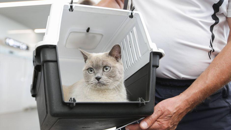 Eine weiße Katze sitzt in einer Transportbox, die von einem Mann gehalten wird.
