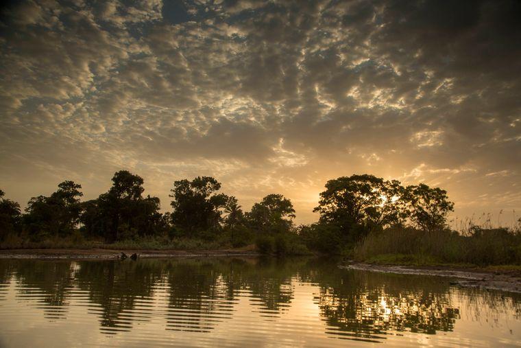 Gambia ist ein kleines, vom Senegal umschlossenes Land in Westafrika mit einem schmalen Küstenstreifen am Atlantik. Wer auf Safari gehen will, wird am ehesten im Nationalpark Kiang West fündig.