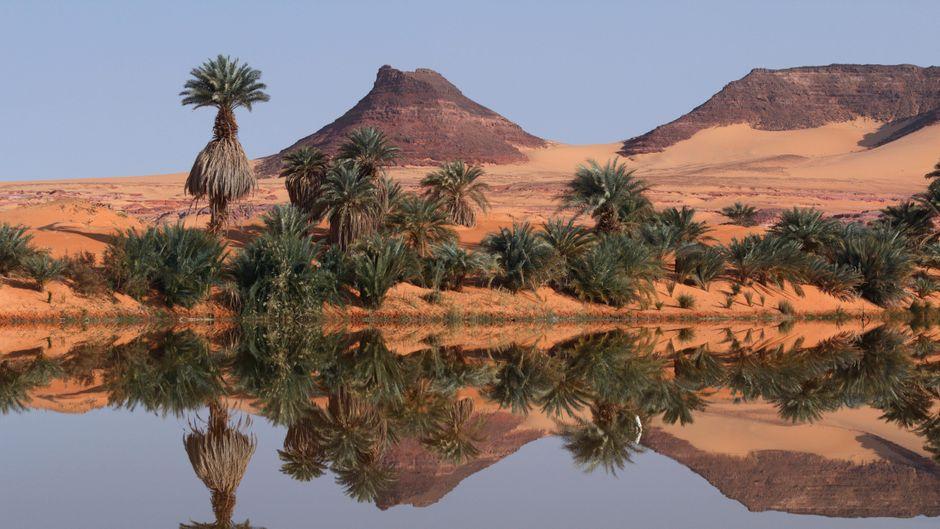 Pflanzen spiegeln sich in der Salzlagune Demi, im Hintergrund das Ennedi-Massiv.