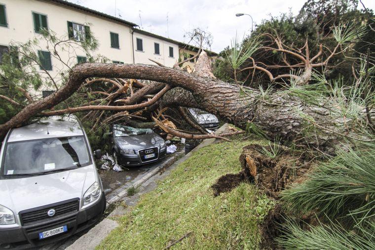Bei dem schweren Unwetter in der Toskana wurden unter anderem Bäume entwurzelt.