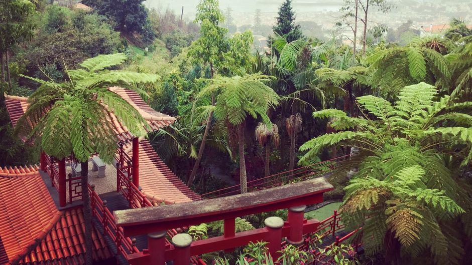 Von den Gärten in Monte hast du einen atemberaubenden Ausblick über die Insel.