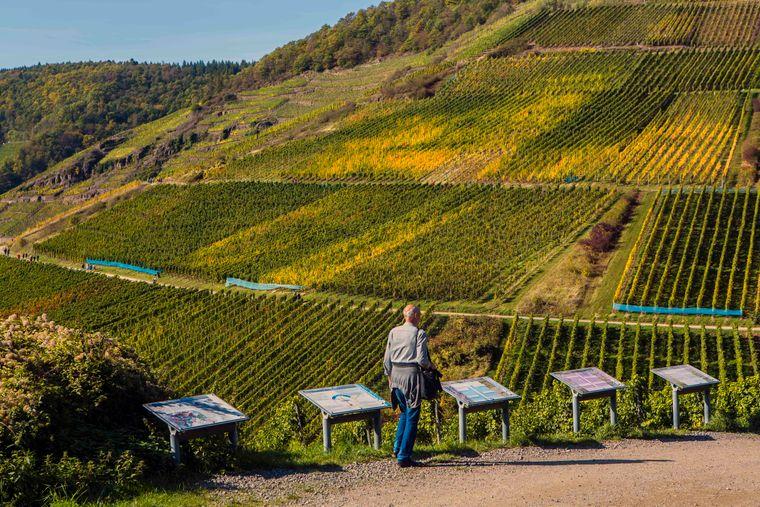 Das Weinbaugebiet Ahr ist das größte geschlossene Rotweinanbaugebiet in Deutschland.